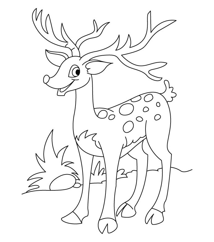 White Tail Deer Drawing