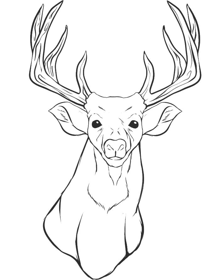 700x892 Coloring Pages Draw A Deer Pics Photos White Tail Drawing And