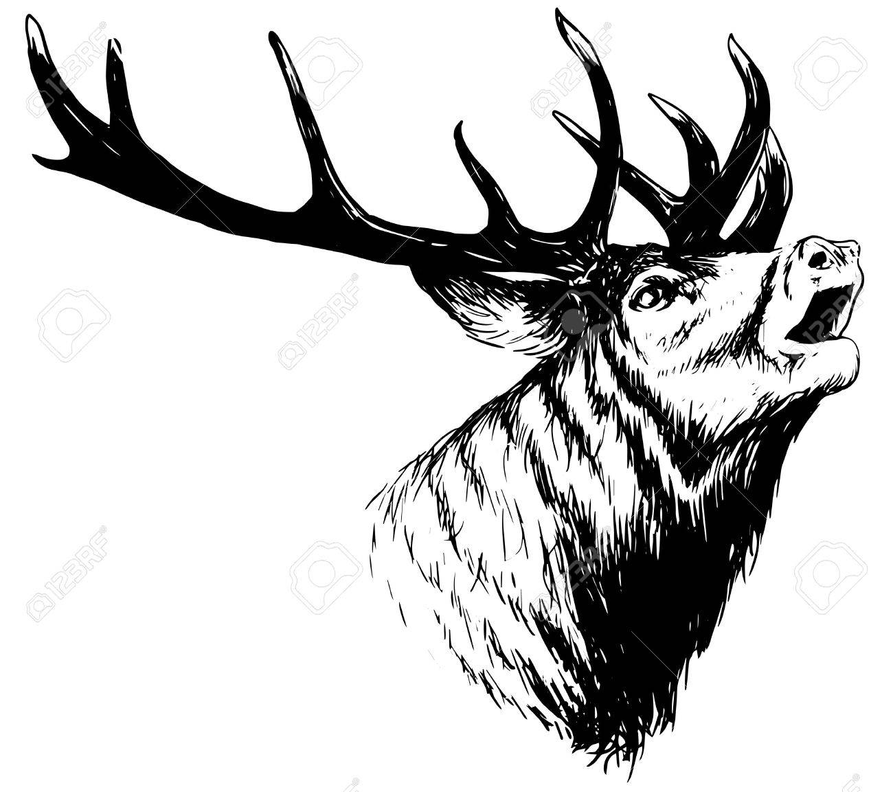 1300x1153 Hand Drawn Image Of Big White Tail Buck Head With Large Antlers