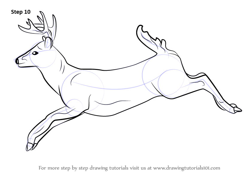 842x596 Learn How To Draw A White Tailed Deer (Wild Animals) Step By Step