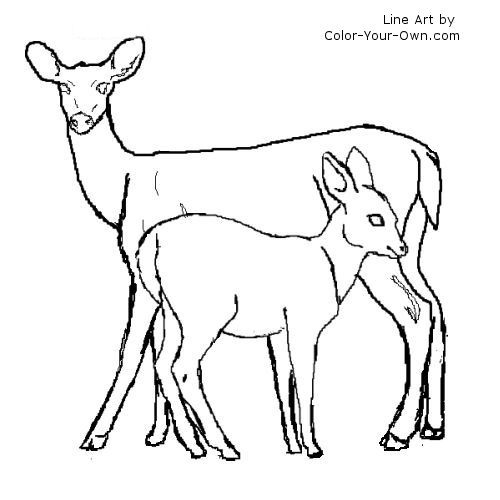 500x500 White Tail Deer Doe And Fawn Coloring Page
