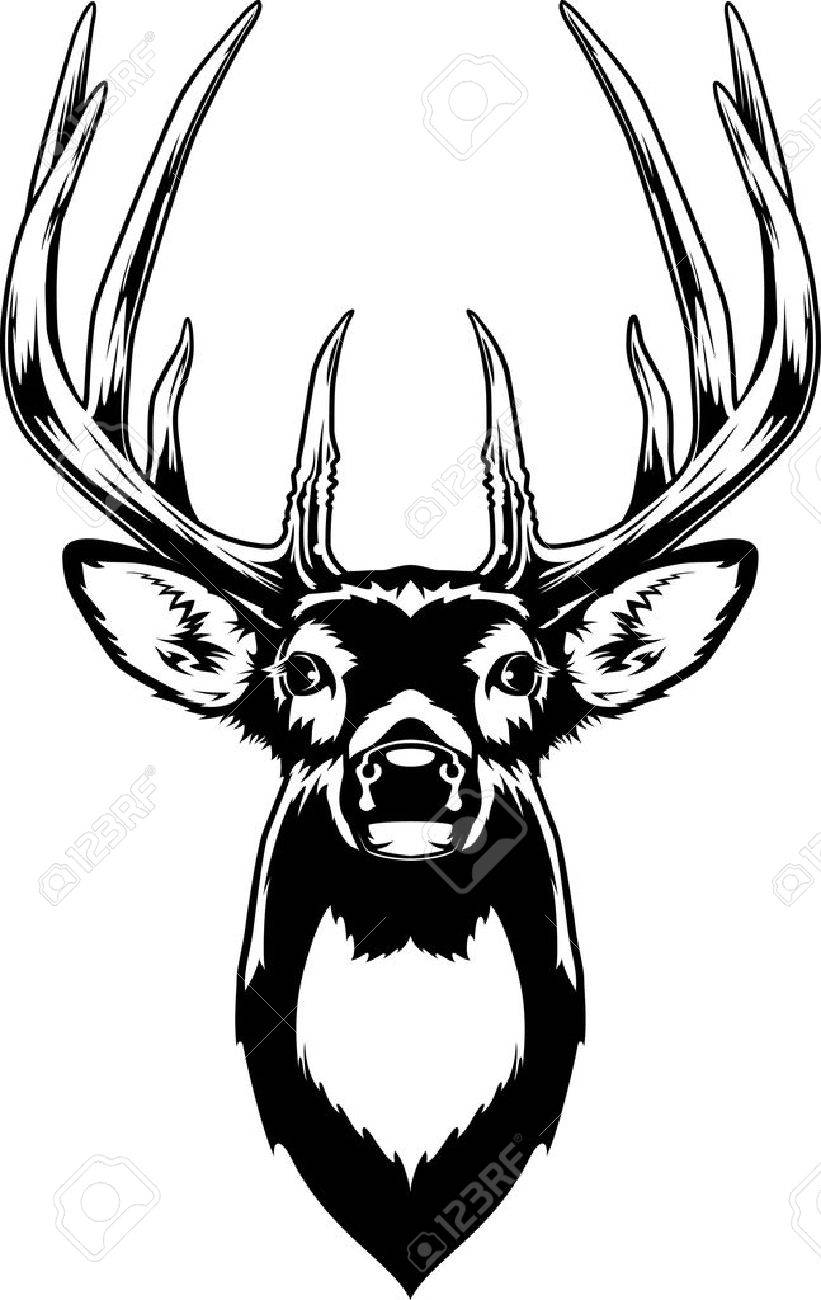 821x1300 Whitetail Deer Head Royalty Free Cliparts, Vectors, And Stock