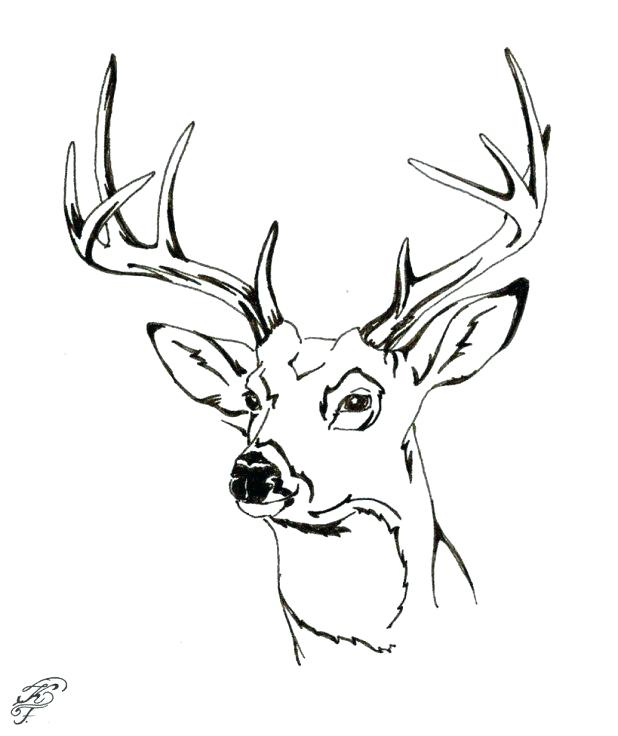 618x736 Spectacular Astounding Whitetail Deer Coloring Pages Kids Hunting