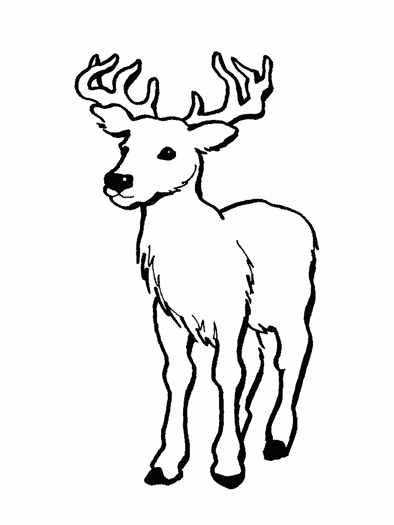 768x1024 Deer Coloring Pages