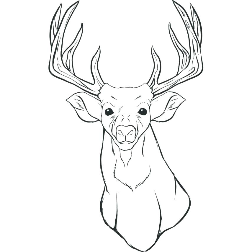 854x854 Deer Coloring Pages Deer Coloring Pages In The Jungle A Deer