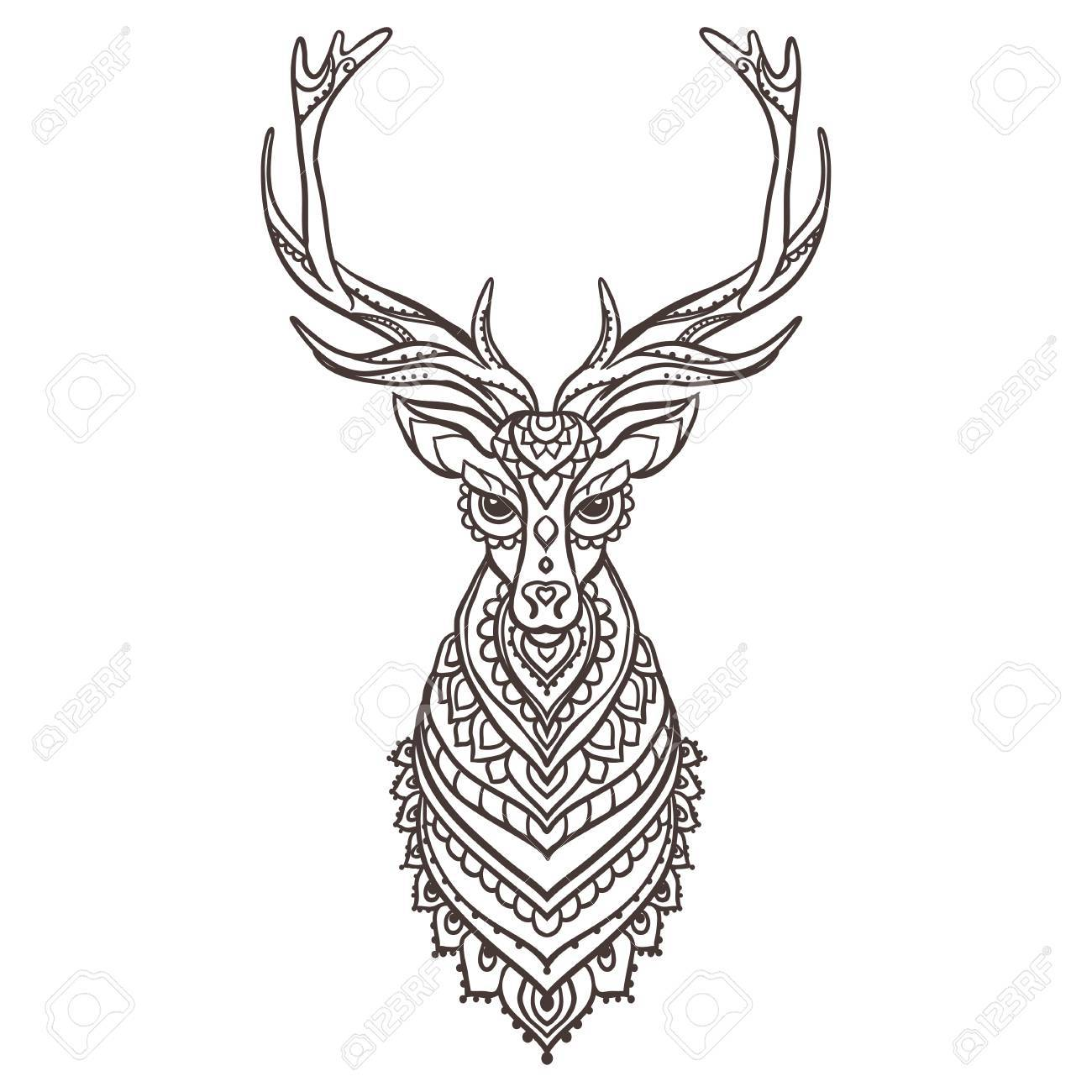 Whitetail Buck Drawing