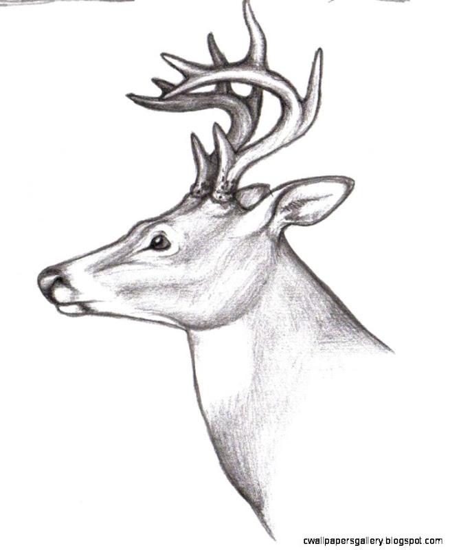 655x800 Deer Buck Drawings Wallpapers Gallery