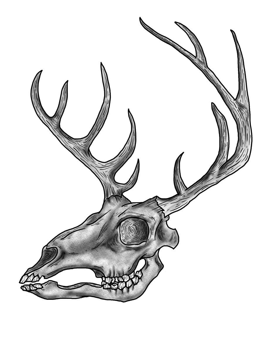 900x1157 Drawings Of Deer Skulls