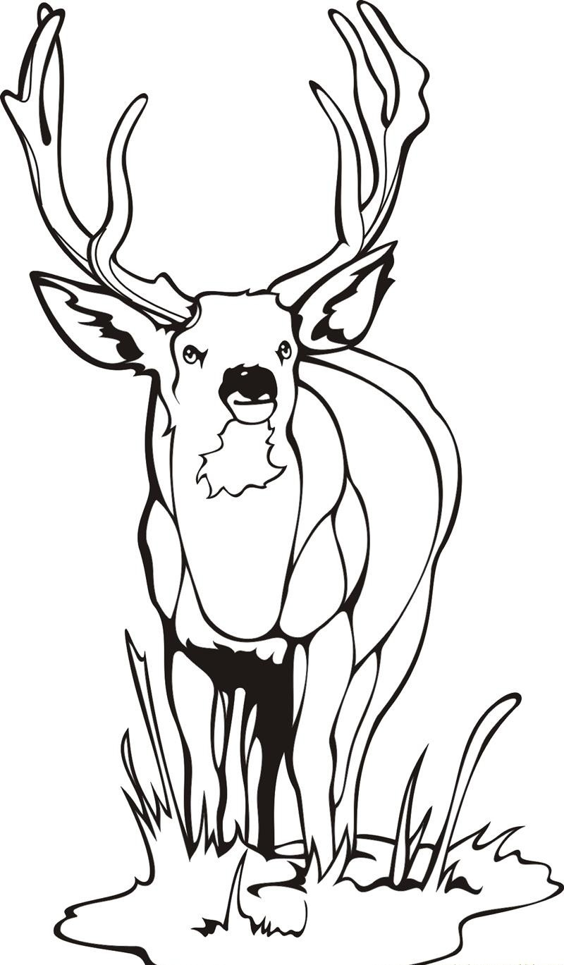800x1369 Free Printable Deer Coloring Pages For Kids Within Page