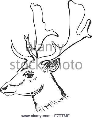 300x389 Illustration Of A Whitetail Deer Buck Stag Head Looking To