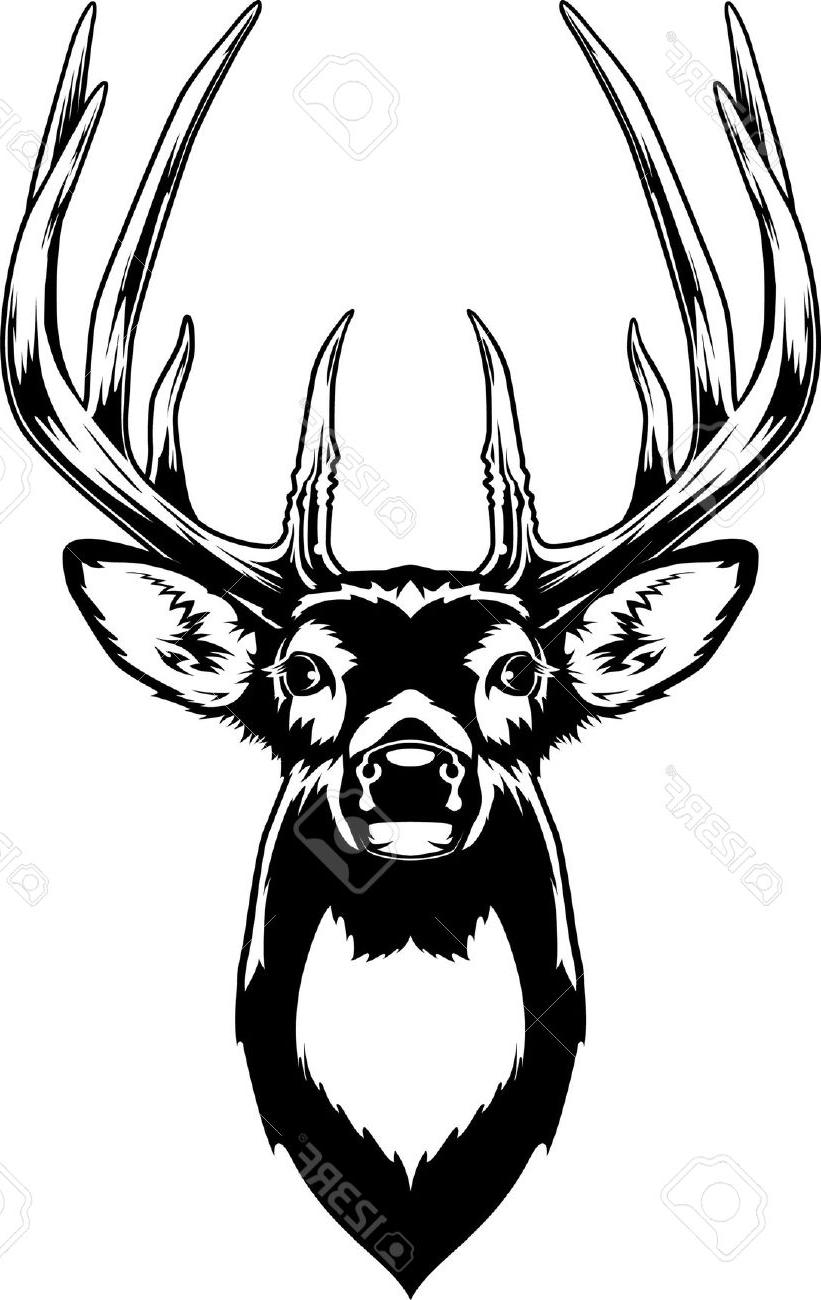 821x1300 Best Hd Head Clipart Whitetail Deer Pictures