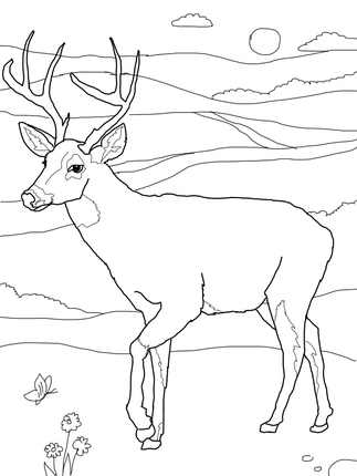 323x430 White Tailed Deer Coloring Page Quilting White