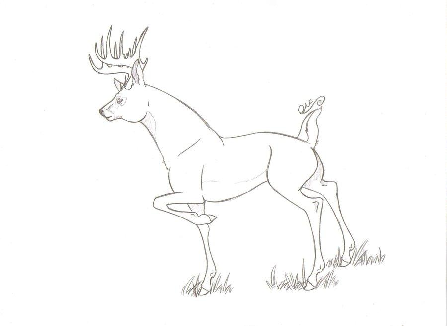 900x658 Whitetail Deer By Bashfulwolf144
