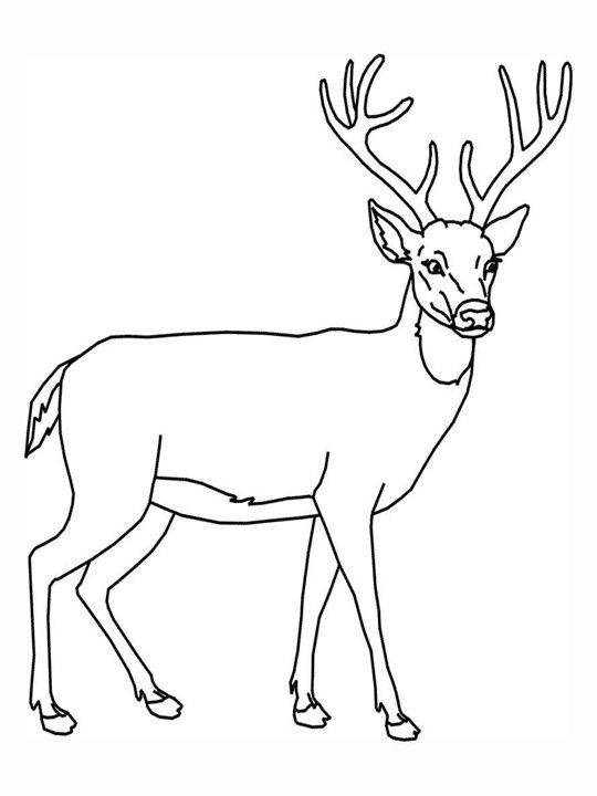 540x720 Attractive Deer Pictures To Print 39 Color Page White Tailed
