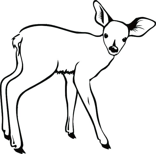 600x592 Coloring Pages Deer Synthesis.site