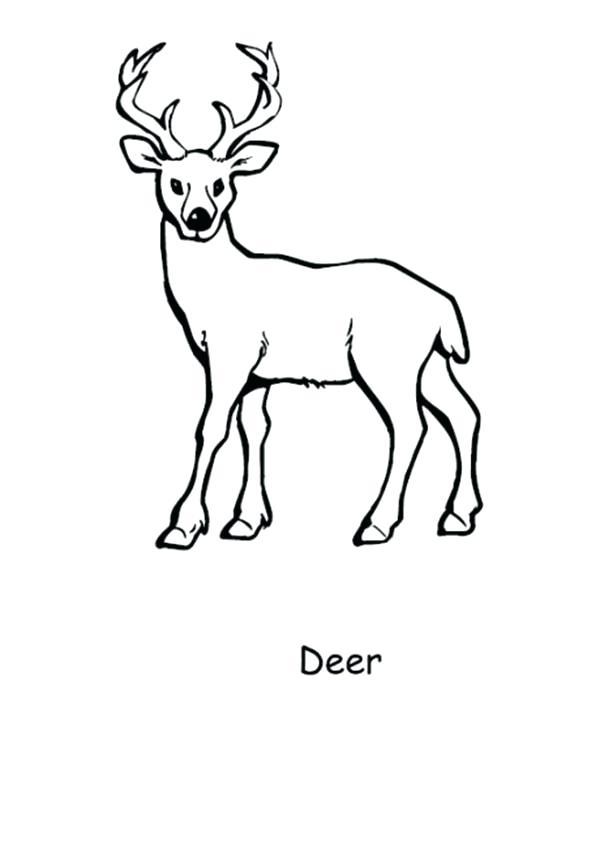 600x852 Deer Coloring Picture Happy Deer Coloring Page Whitetail Deer
