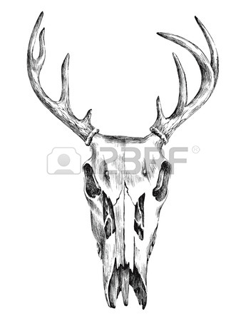 345x450 Deer Skull Stock Photos. Royalty Free Business Images