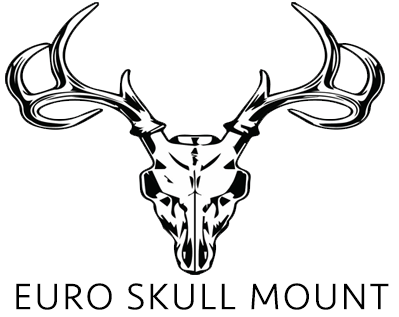 399x317 Euro Skull Mount Hydrographics Skull Cleaning Tanning
