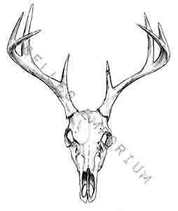 254x300 Skull Temporary Tattoo Deer Head Temporary By Joellesemporium