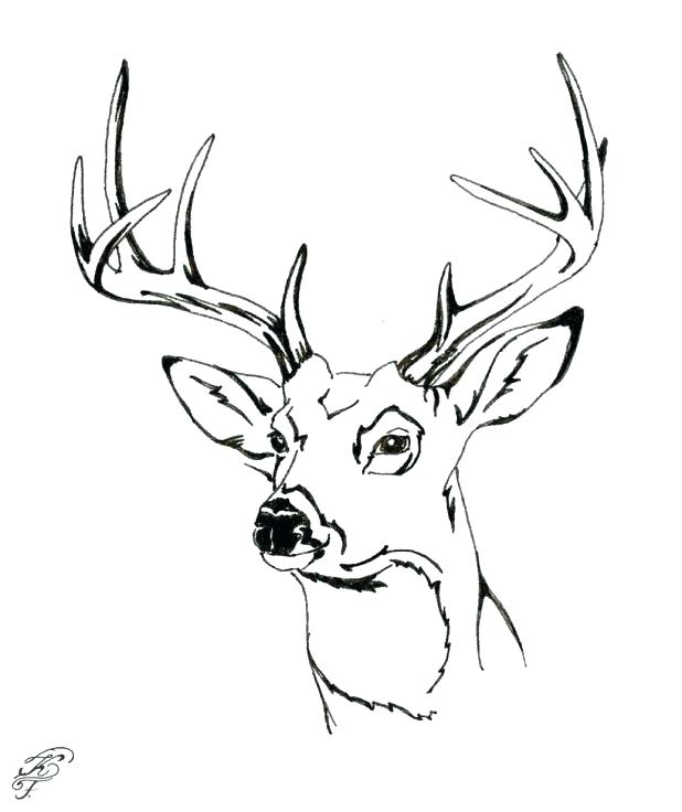 618x736 Deer Head Coloring Pages Also Greater Mouse Deer Coloring Page 0