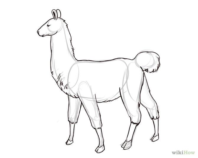 670x536 How To Draw A Llama 6 Steps