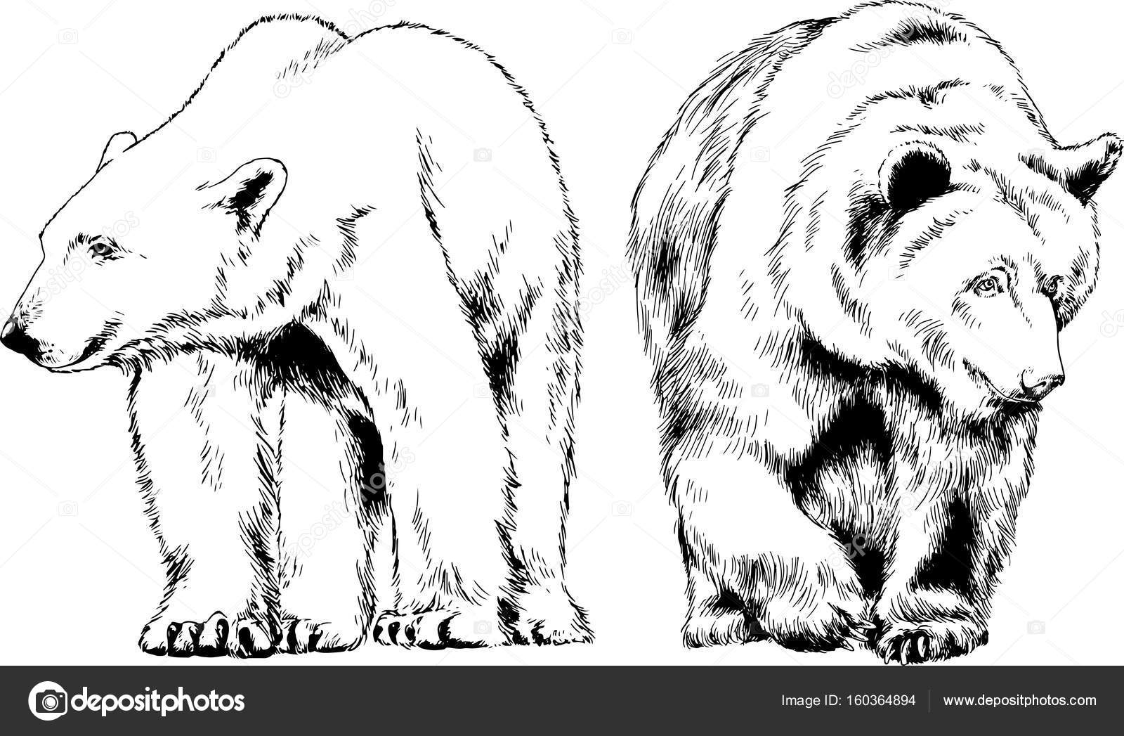 Line Drawings Of African Animals : Wild animal drawing at getdrawings.com free for personal use