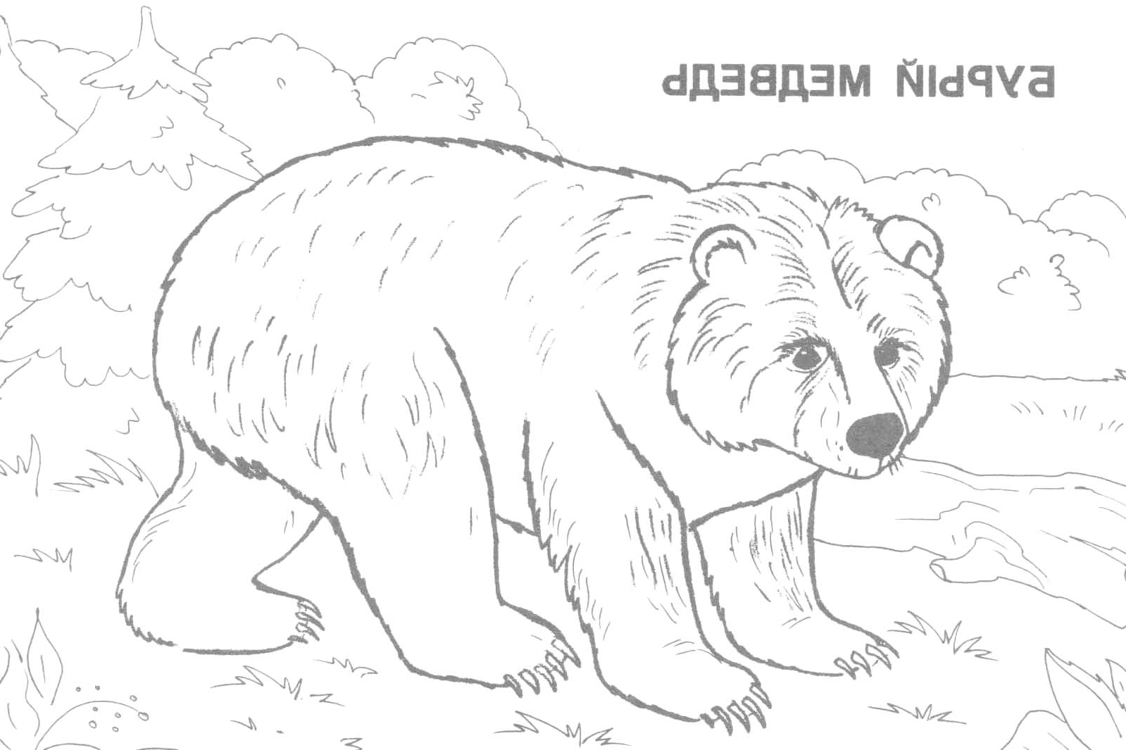 1599x1065 Wild Animals In The Wild Drawings Drawings Of Wild Animals