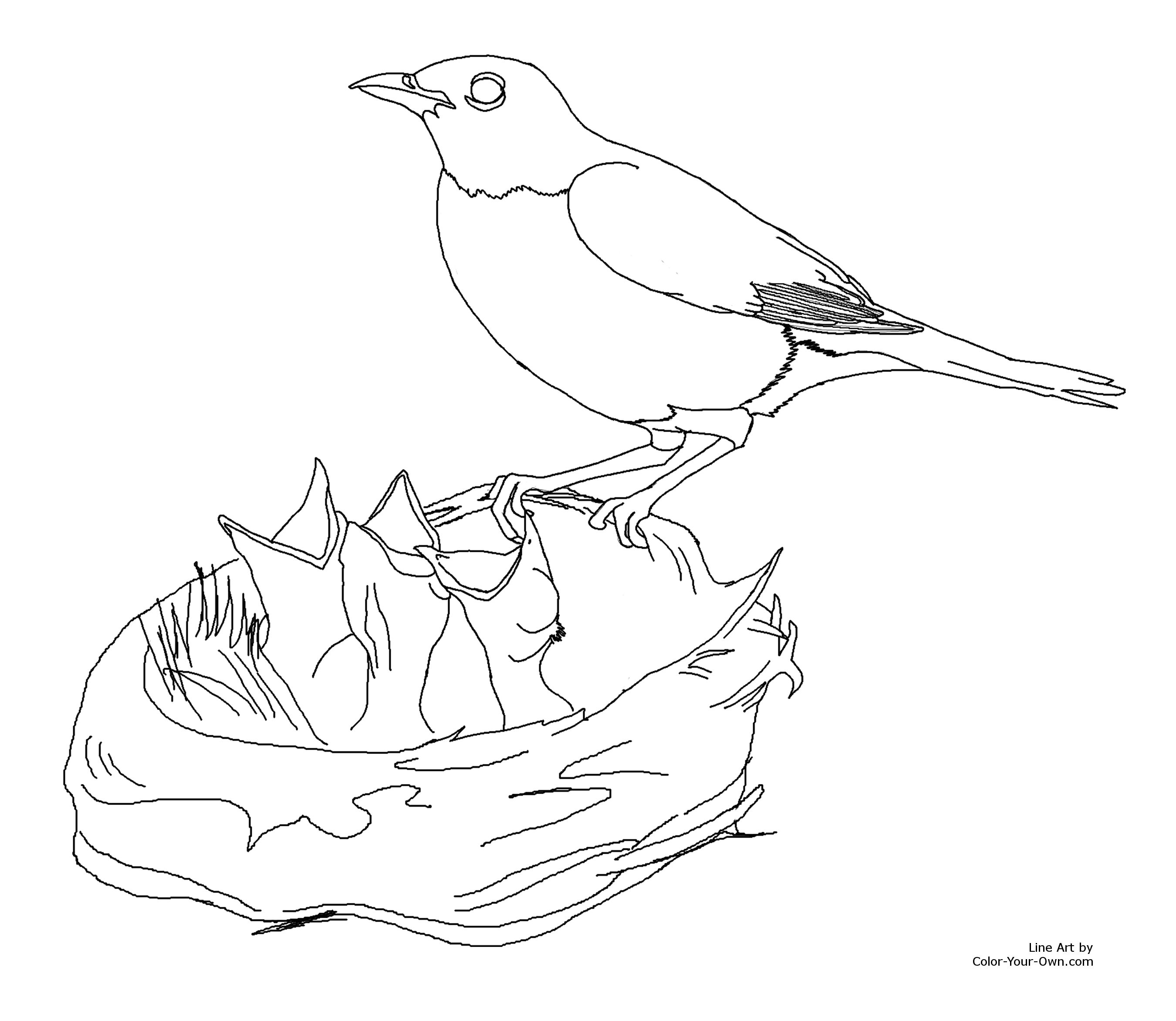 2700x2344 Robin Feeding Baby Birds Coloring Page
