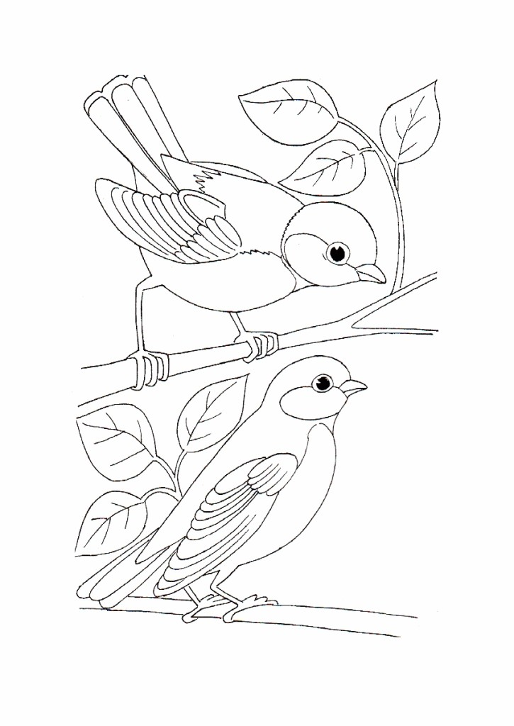 725x1024 Wild Bird Coloring Pages Stitcheryness Bird