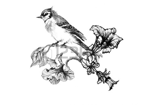 450x335 Wild Exotic Bird On Twig Royalty Free Cliparts, Vectors, And Stock