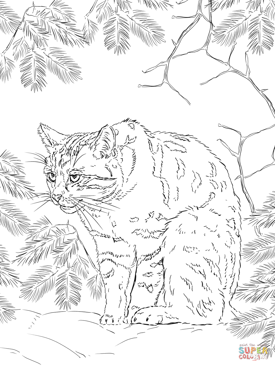 899x1199 Scottish Wildcat Coloring Page Free Printable Coloring Pages