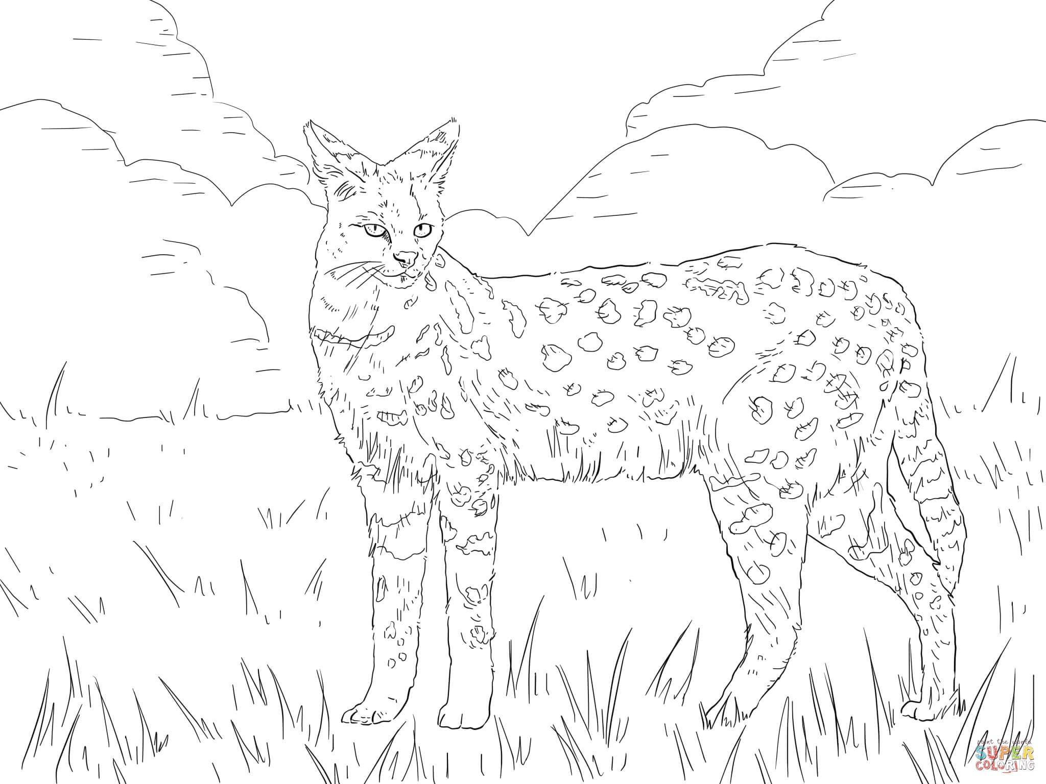 2048x1536 Serval Animal Coloring Pages Luxury Serval African Wild Cat