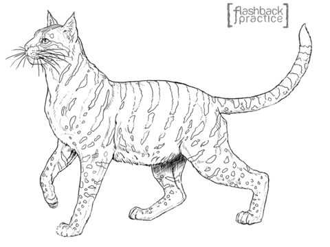 480x360 Andean Mountain Wildcat Coloring Page Free Printable Coloring Pages