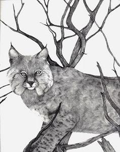 237x300 Bobcat Portrait