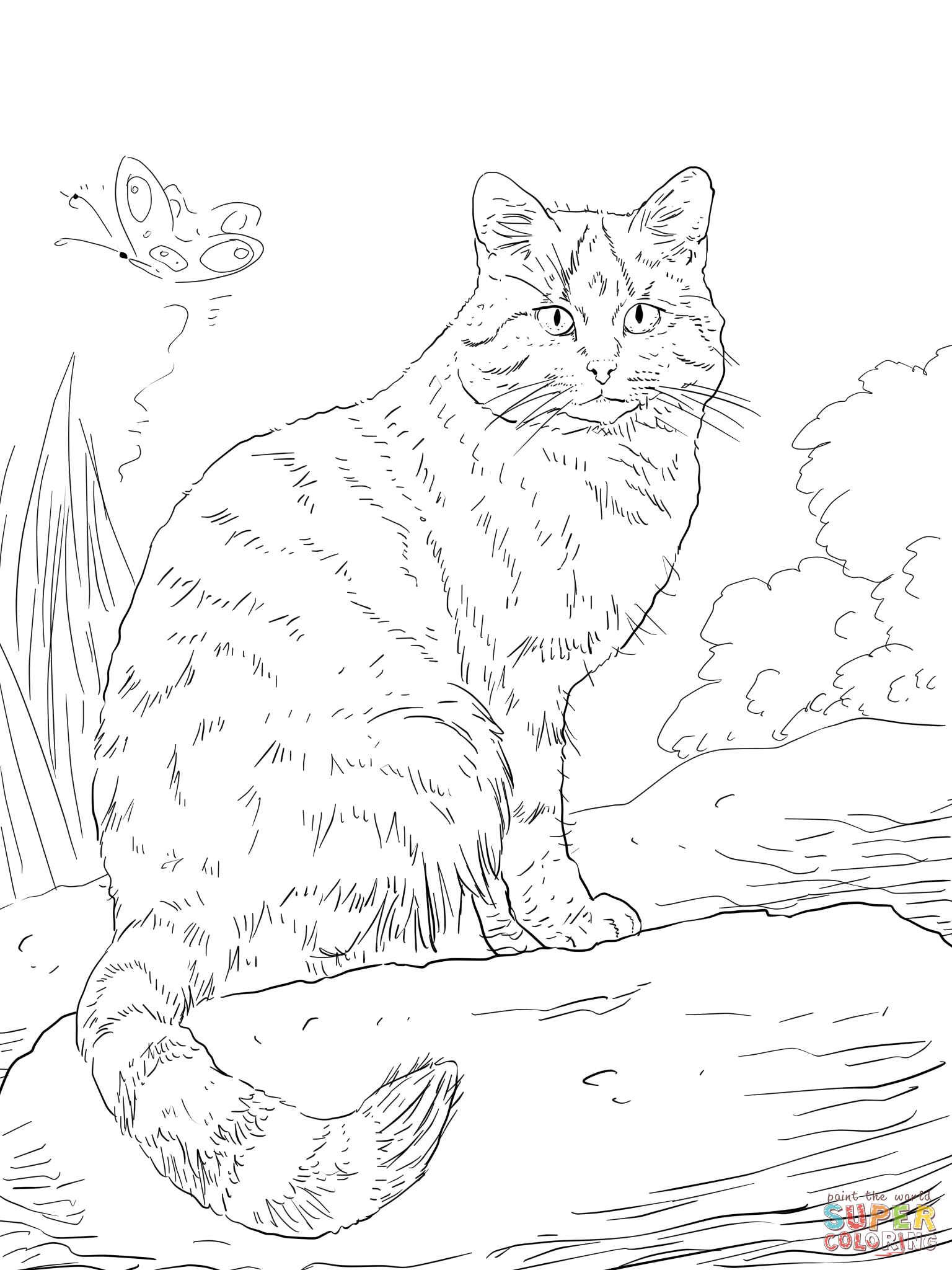 Wild Cat Drawing at GetDrawingscom Free for personal use Wild Cat