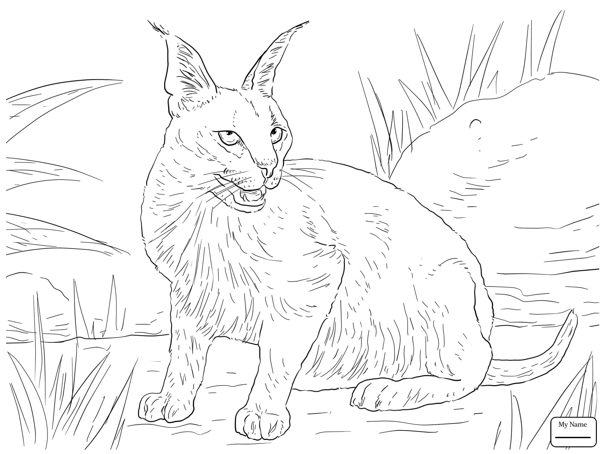 2089x1567 Wild Cats Mammals Andean Mountain Wildcat Coloring Pages For Kids