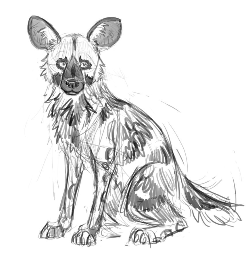 Wild Dogs Drawing