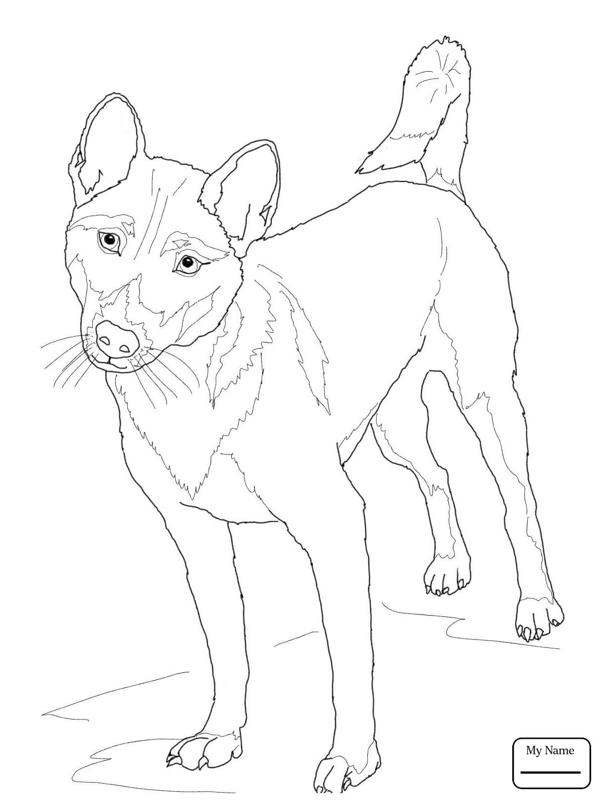 1224x1632 Wild Dogs Mammals New Guinea Singing Dog Coloring Pages