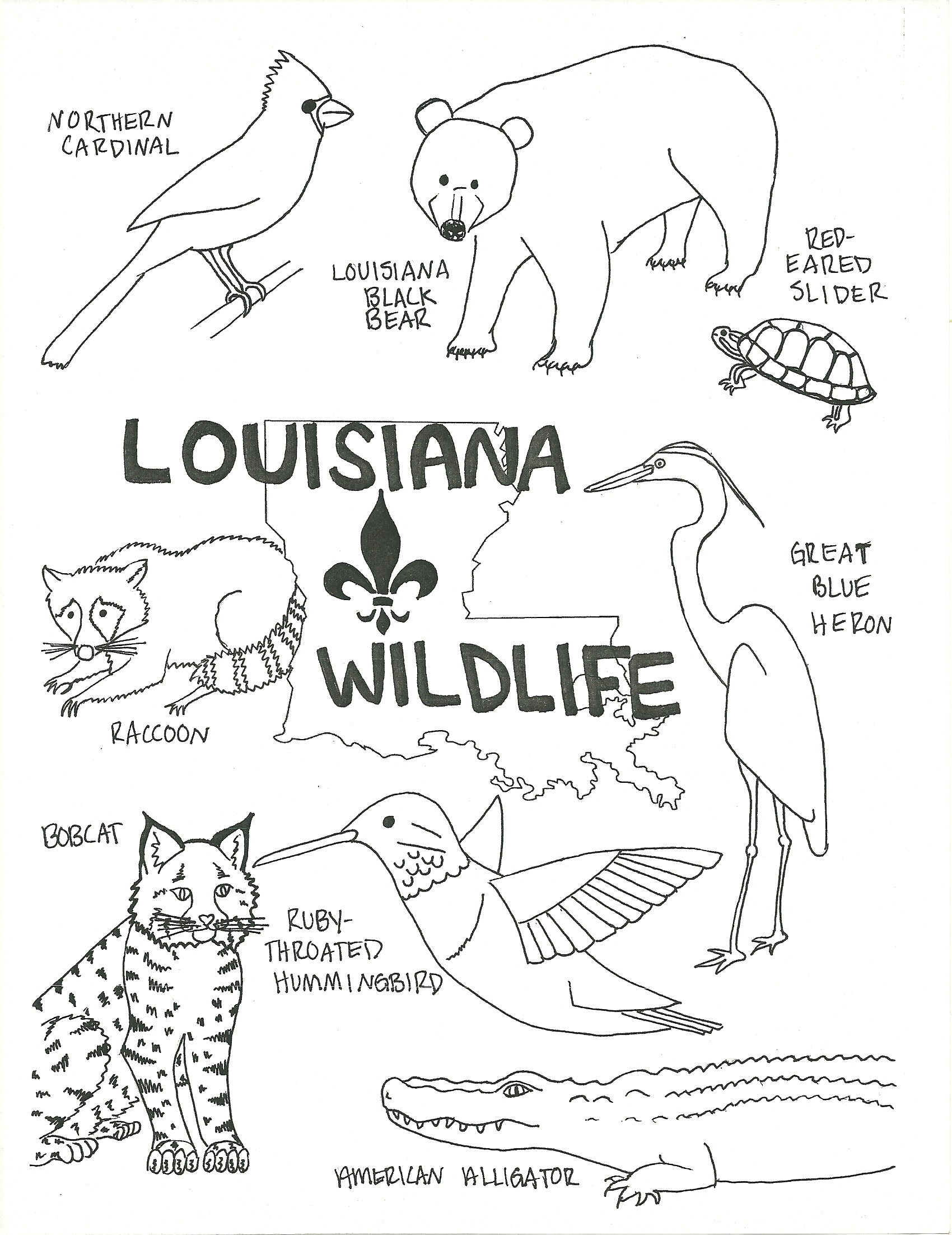 1700x2204 Louisiana Wildlife Coloring Page Beat Up Road Sign