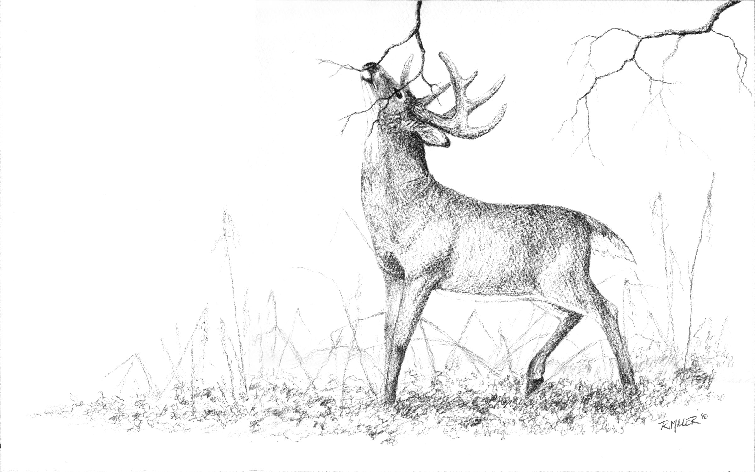 Wild Life Drawing at GetDrawings | Free download