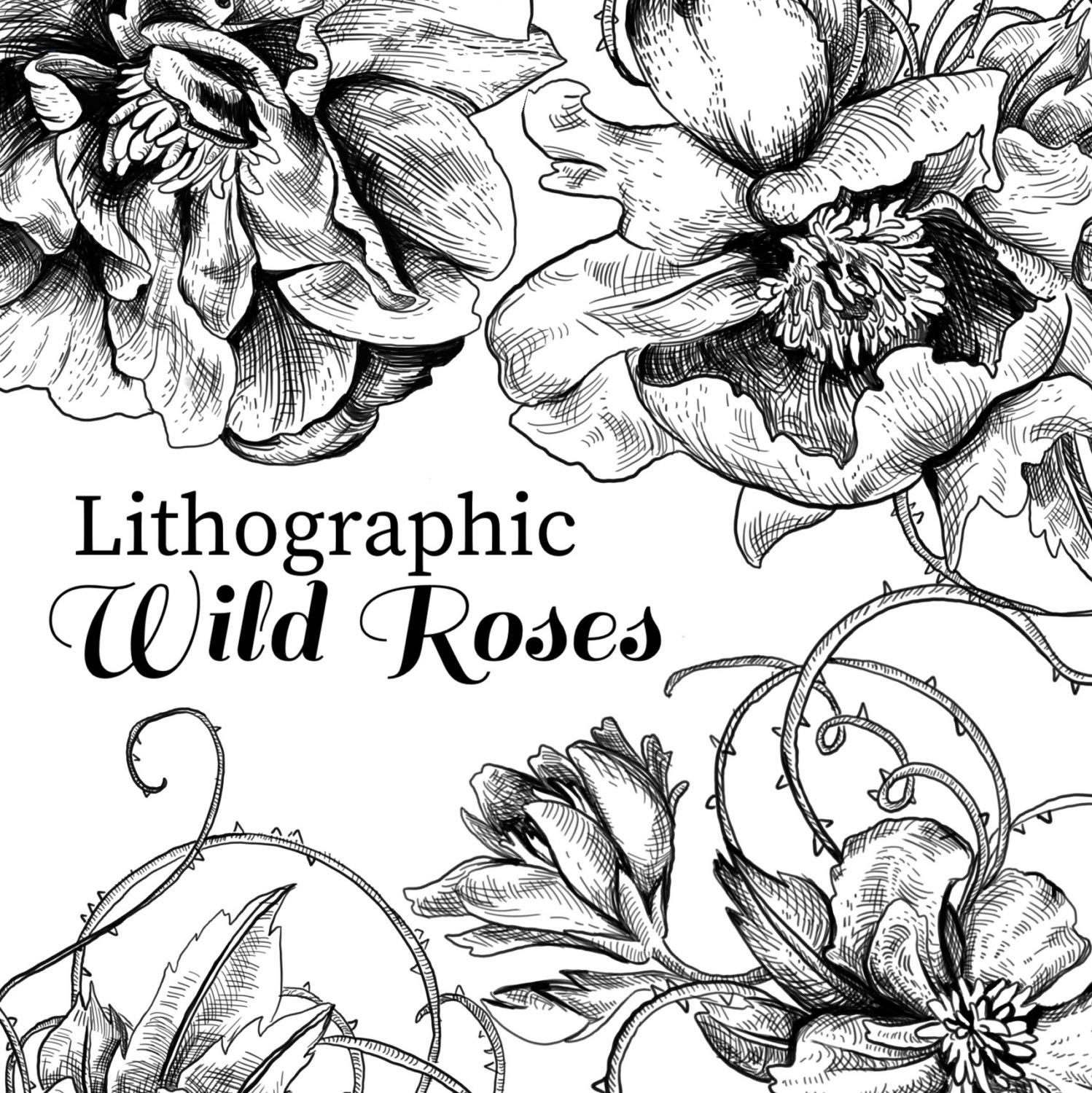 1498x1500 Floral Clipart Wild Roses Lithographs Vintage Clipart Rose