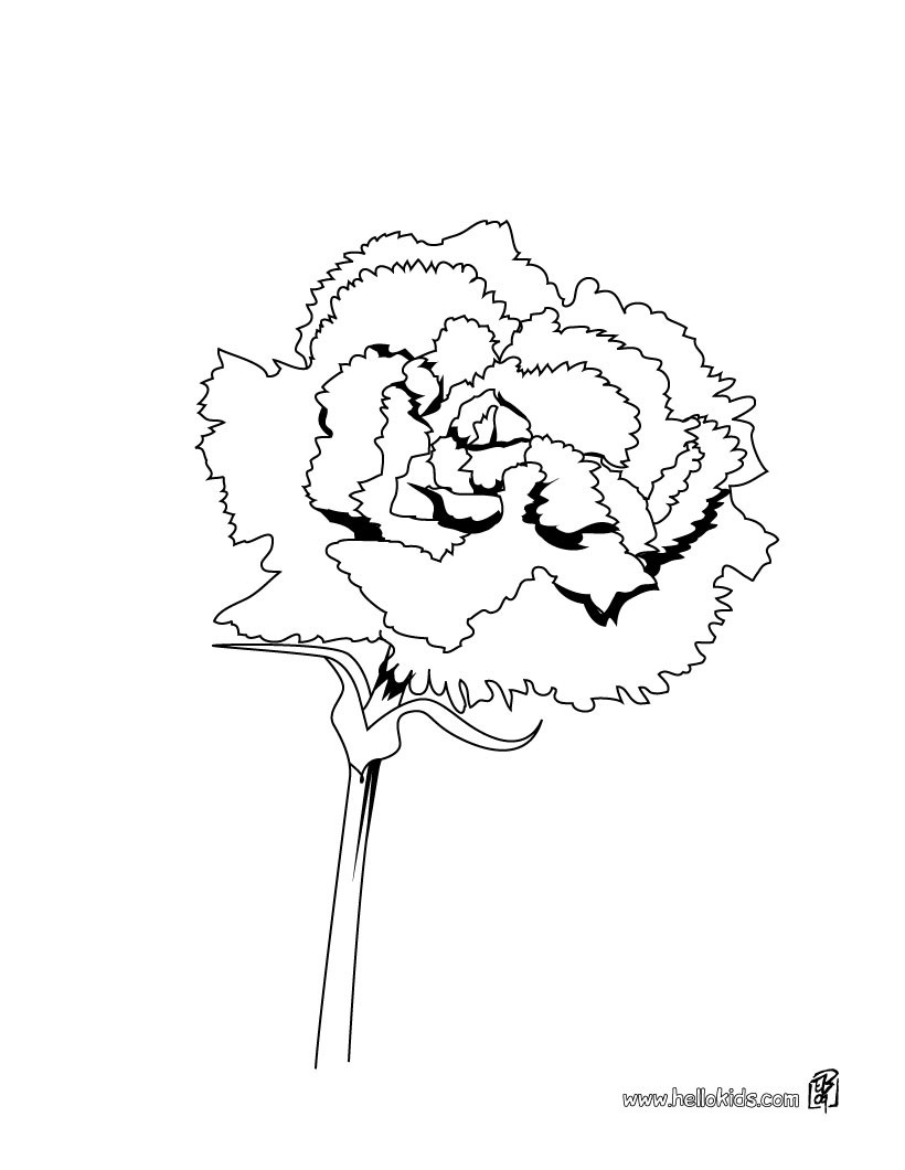 820x1060 Rose Coloring Pages
