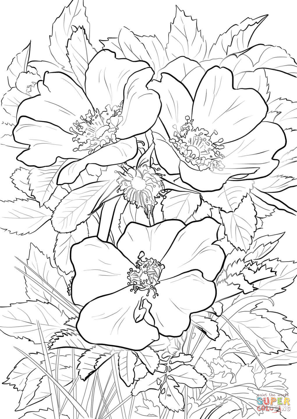 1020x1440 Wild Prairie Rose Coloring Page Free Printable Coloring Pages