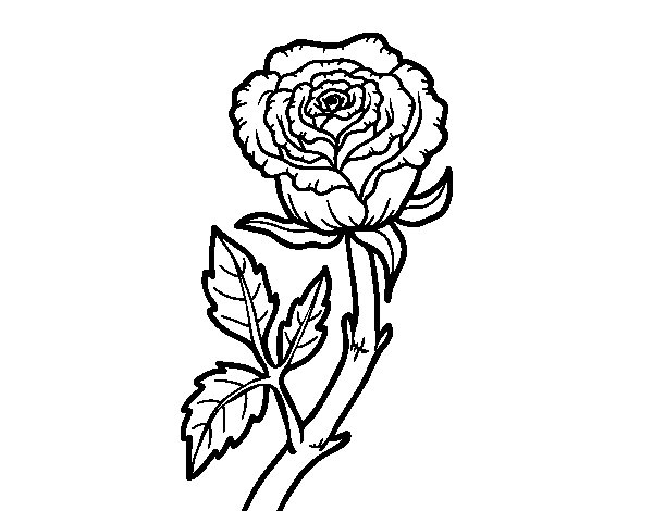 600x470 Wild Rose Coloring Page