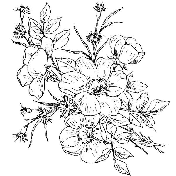 600x600 Black And White Wild Rose Tattoo