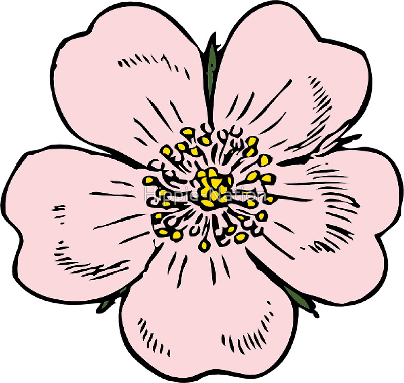 800x759 Pink Wild Rose Female Girl Woman Flower Cute Beautiful Hippie