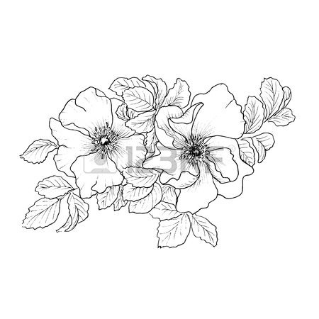450x450 Briar. Wild Rose Isolated On White. Royalty Free Cliparts, Vectors