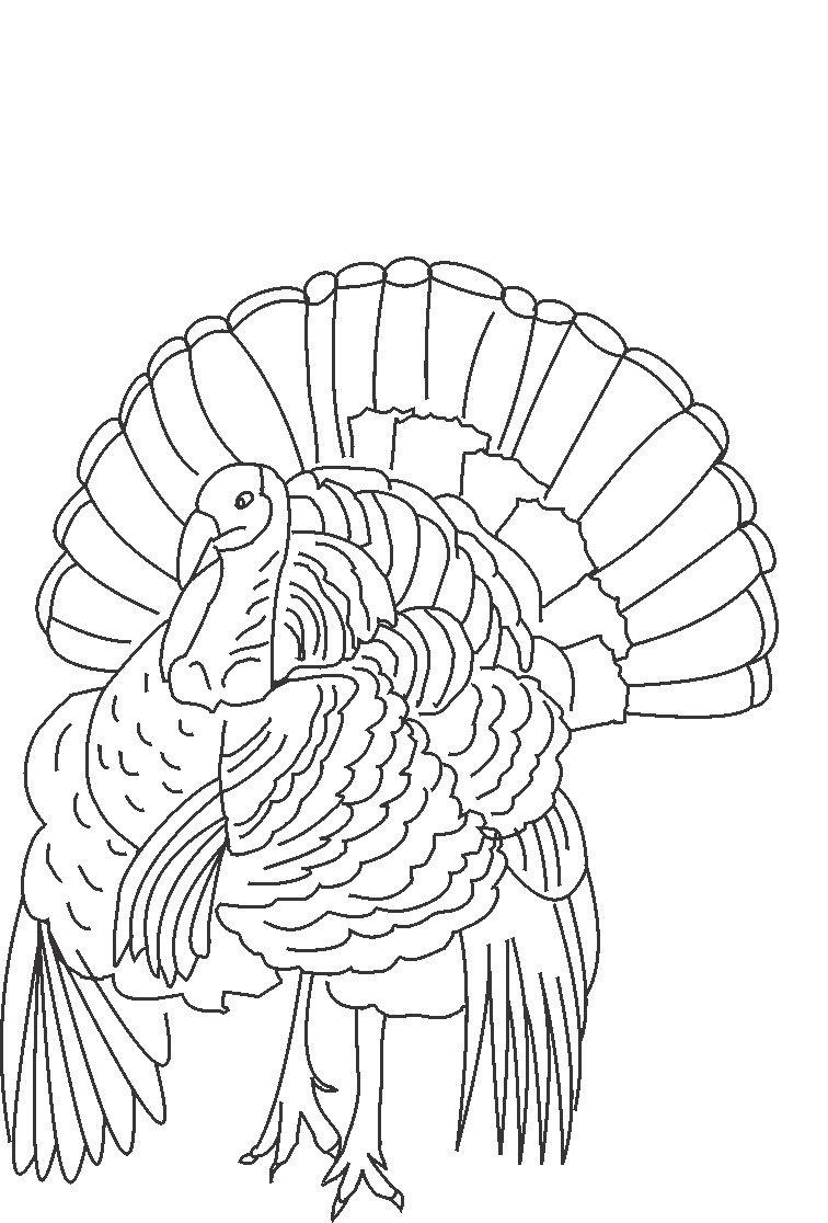 Wild Turkey Coloring Pages Printable 1 756x1116 Free Print Out Thanksgiving Turkeys