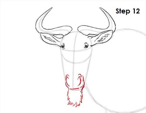 500x386 How To Draw A Wildebeest