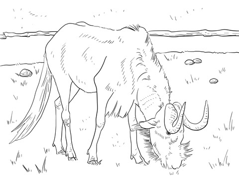 480x360 Realistic Black Wildebeest Coloring Page Free Printable Coloring